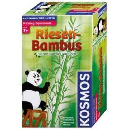 Bambus Riesenpflanze