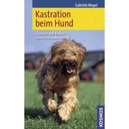 Kastration beim Hund