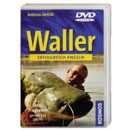 Waller angeln