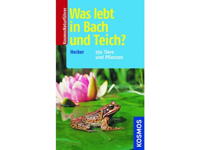Was lebt in Bach und Teich?