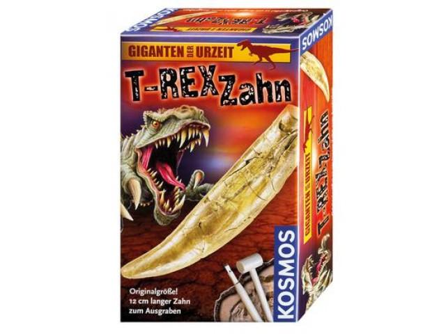 T-rex Zahn - Ausgrabung