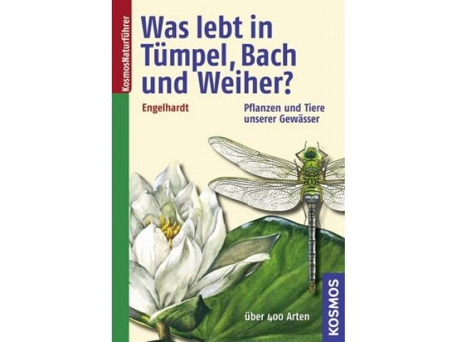 Was lebt in Tümpel, Bach und Weiher?