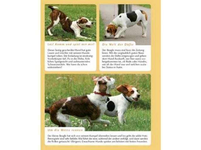 Bild (1): Hundeschule
