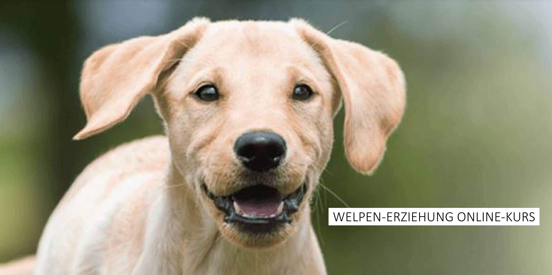Kosmos Welpen-Erziehung Online-Kurs - Hunde